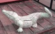 Alligator - Medium