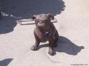 Bulldog - Sitting