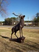Elk on Rock