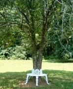 Tree Bench - Small